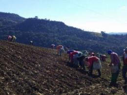 Trabalhadores escravizados são resgatados em plantação de cebola em Ituporanga